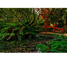 Autumn Colours at Alfred Nicholas Memorial Gardens Photographic Print