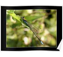 baby dragon fly Poster