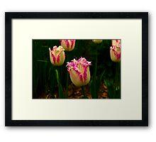 Frilly Tulip (Spring Bulbs) Framed Print