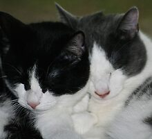 Tully & Tally (Brother & Sister) by Cheri Perry