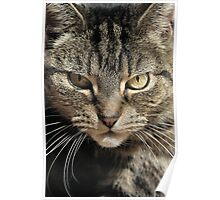 The Huntress - A Tabby Cat about to Pounce Poster