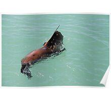 seal waving Poster