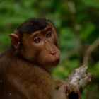 Macaque by emmelined