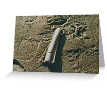 Razor Shell in Sand Greeting Card