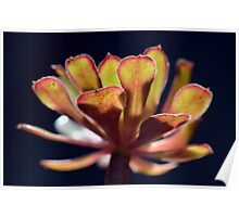 Cactus plant with golden tones Poster