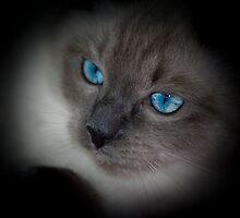 Saphire Eyes by pixelartdesigns