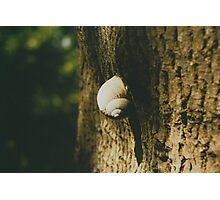 Big snail on a tree trunk Photographic Print