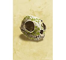 cat skull painted with wasabi flowers Photographic Print