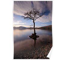 Millarochy tree Poster