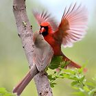 When Cardinals Kiss by Gary Fairhead