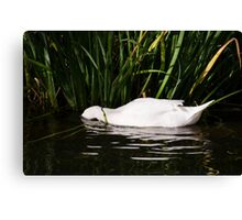 Sleep in water Canvas Print