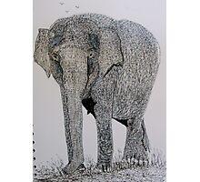 The Asian Elephant Photographic Print