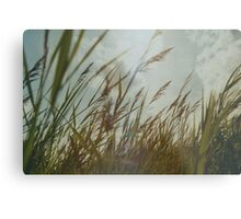 Dutch Dunes in the Summer Sun  Metal Print