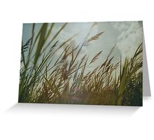 Dutch Dunes in the Summer Sun  Greeting Card