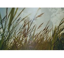 Dutch Dunes in the Summer Sun  Photographic Print