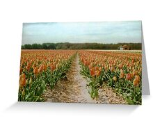 Dutch Tulips Fields Greeting Card