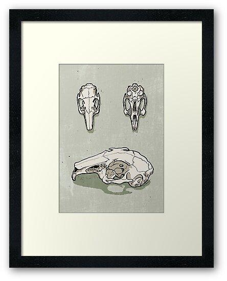 rabbit skull by Richard Morden