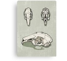 rabbit skull Canvas Print