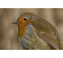 Red Robin Photographic Print