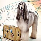 Traveling Dog by susan stone
