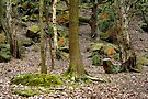 Bramley Fall Woods by richman