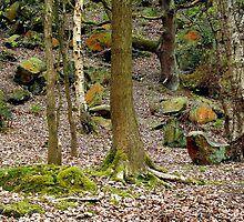 Bramley Fall Woods by richman