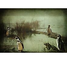 The Penguin Patch Photographic Print