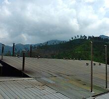 tea factory by bayu harsa