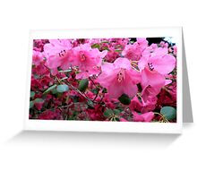 Pink Rhododendron Greeting Card