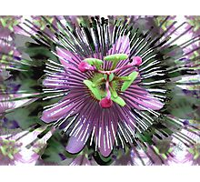 "Abstract - ""Guess the flower"" Photographic Print"