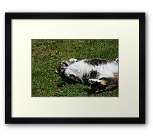 Silly Silly Bootsie Framed Print