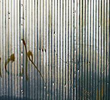 censorship - the suppression of words by Lynne Prestebak