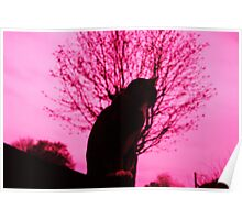 Pink dreams, yet only 9 lives Poster