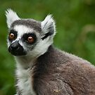 Portrait of a Lemur by Lissywitch