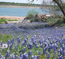 Bluebonnets  Where They Have Not Been For Years. by icesrun