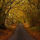 Autumn, Beecraigs by smcneem