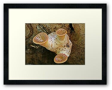 triangle fungi by Manon Boily