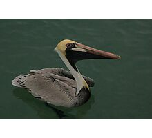 Brown Pelican w/ watercolour filter Photographic Print
