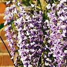 Beautiful Wisteria by Monica M. Scanlan