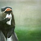 Debrazza Monkey by Lissywitch