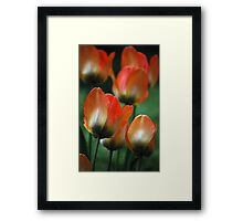 Painted Petals Framed Print