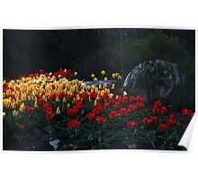 Tulips At Dusk Poster