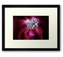 Your Velvet Touch Framed Print