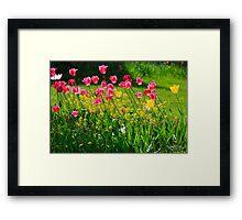 """ Just Tulips "" Framed Print"