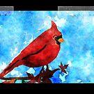 Cardinal by colleen e scott