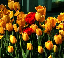 MOTHERS DAY SPECIAL by Larry Trupp