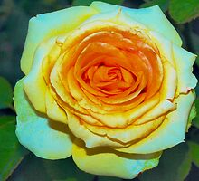 Full yellow rose with peach highlights by ♥⊱ B. Randi Bailey