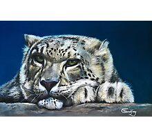 Snow Leopard Feeling Blue Photographic Print