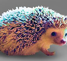 Hedgehog by ClaireCrisci
