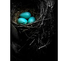 in the nest Photographic Print